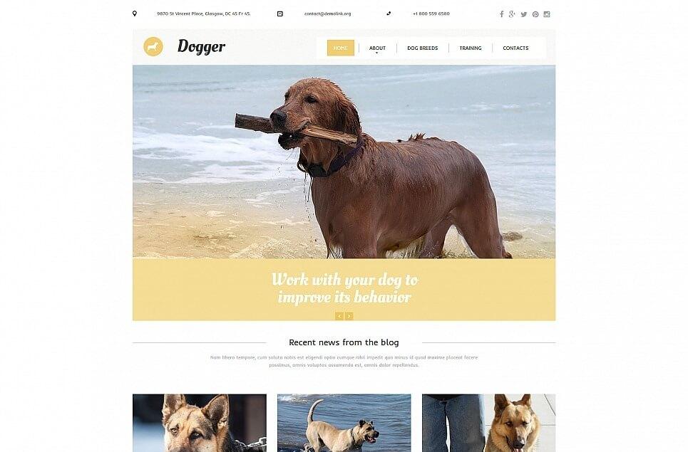 Dog Responsive Moto CMS 3 Template
